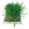 Котешка трева - 100 гр