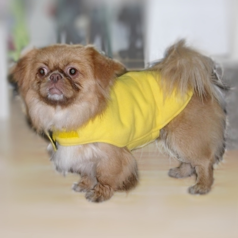 "Кучешка зимна дреха с проимазка и хастар ""Родопа"""
