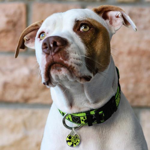 Rogz ID Tag - медальон за нашийник от модната колекция за кучета Lime Juice