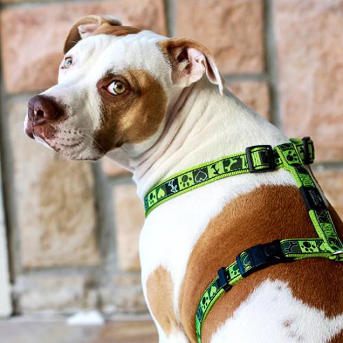 Класически нагръдник - модна колекция за кучета Rogz Lime Juice