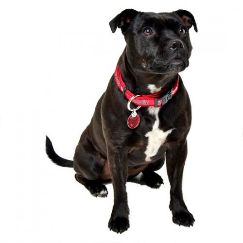Rogz ID Tag - медальон за нашийник на куче от модната колекция Red Bones