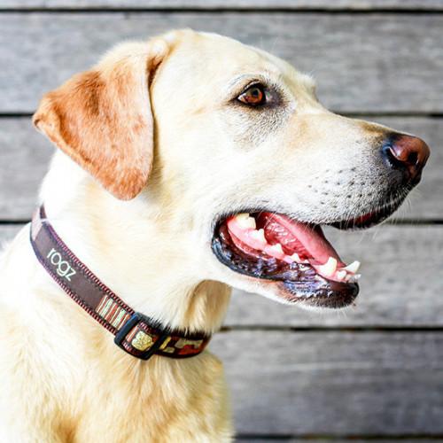 Класически кучешки нашийник Rogz Classic Collar - модна колекция Mocha Bone