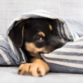 Къщички, постелки и легла за кучета