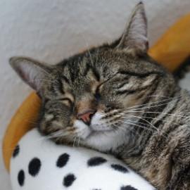 Постелки, легла и къщички за котки