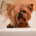 Хигиена, козметика и груминг за кучета