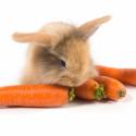 Храна за зайци