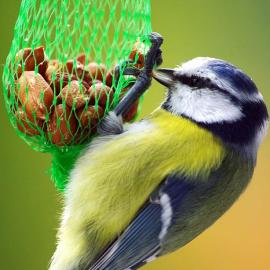 Храна за птици