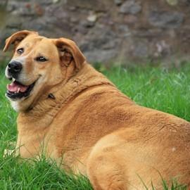 Диетична храна за кучета
