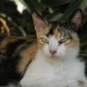 Храна за отраснали котки