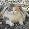 Диетична храна за котки