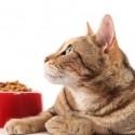 Видове котешка храна