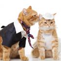 Аксесоари за котки